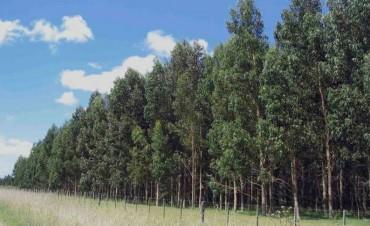 Continúa abierta la inscripción para el Plan de incentivo a la actividad forestal