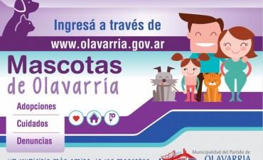 """""""Mascotas de Olavarría"""" en la web"""