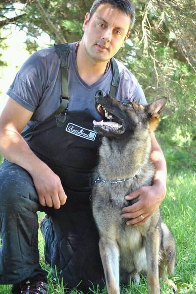 La importancia del adiestramiento canino