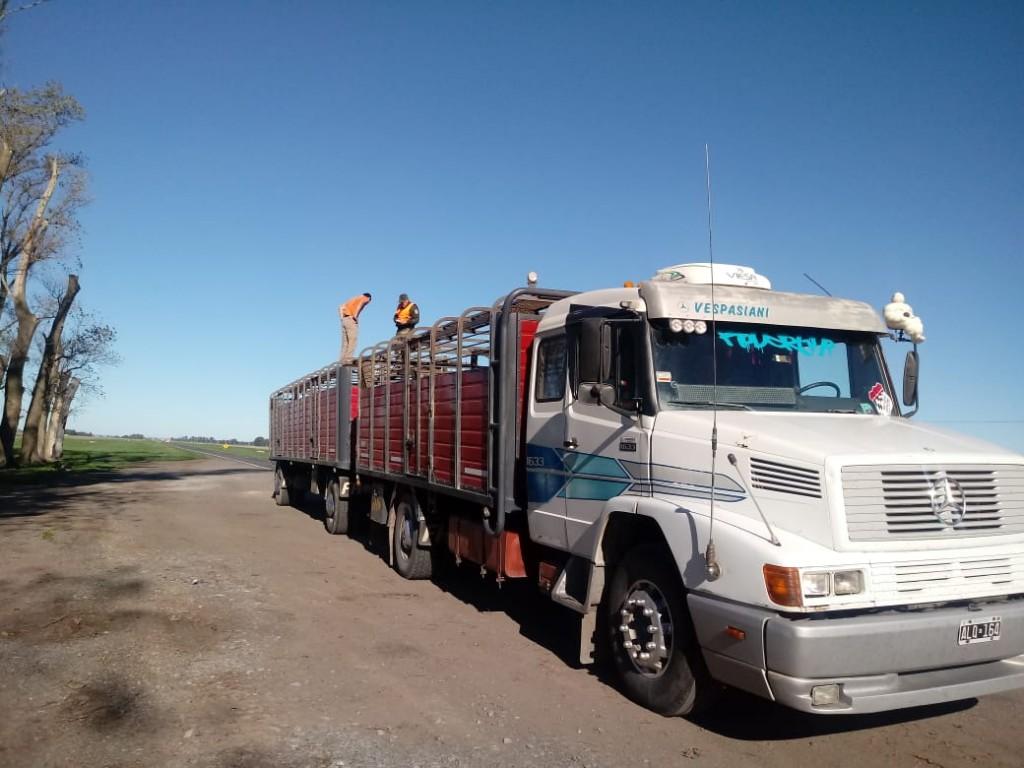 Interceptan un camión con vacunos con marcas ilegibles