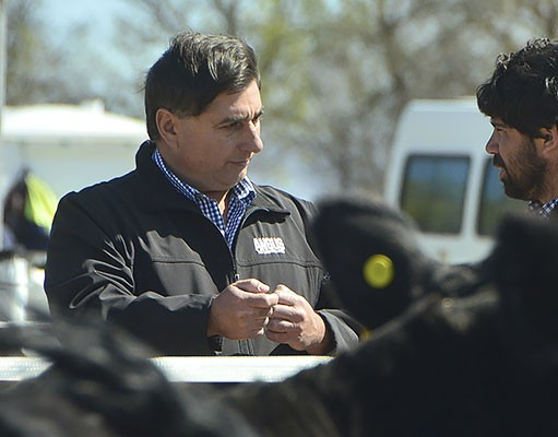 La ganadería Angus argentina trasciende en Estados Unidos y Canadá