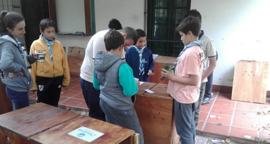 Guías y Scouts participan del proyecto de restauración de pecaríes de collar