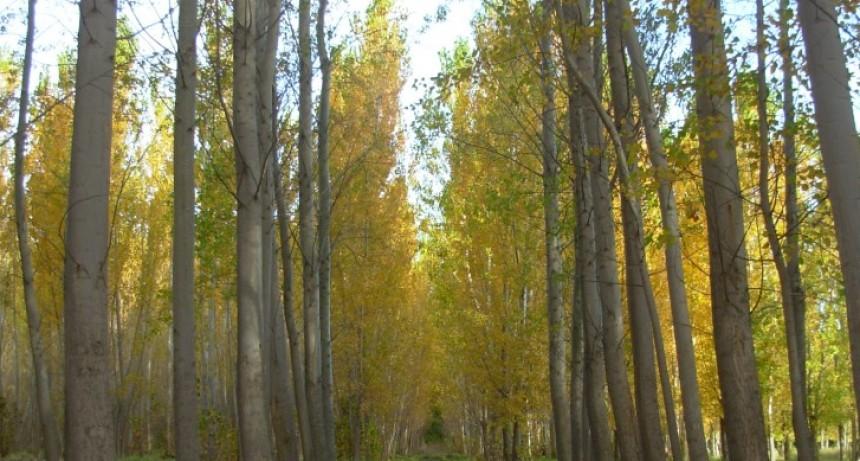 Plan de Incentivos a la Actividad Forestal 2019