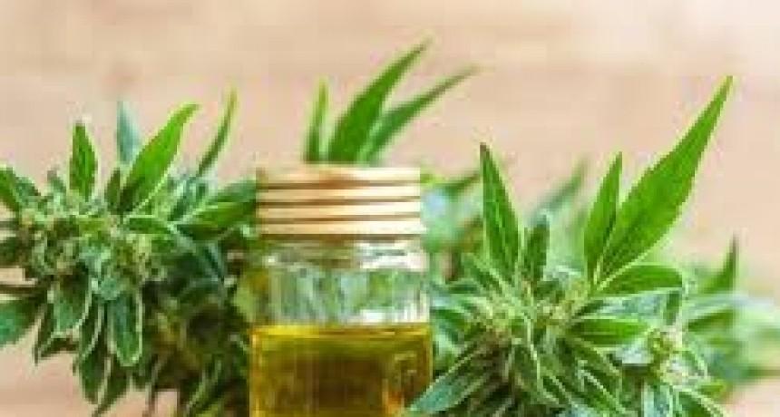 Cannabis medicinal: para que la ley funcione hace falta más información y compromiso