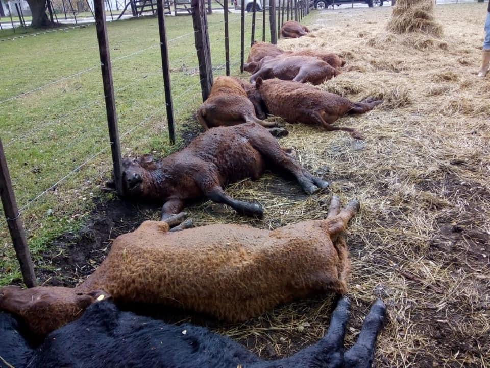 Rayos, centellas y la muerte de ganado