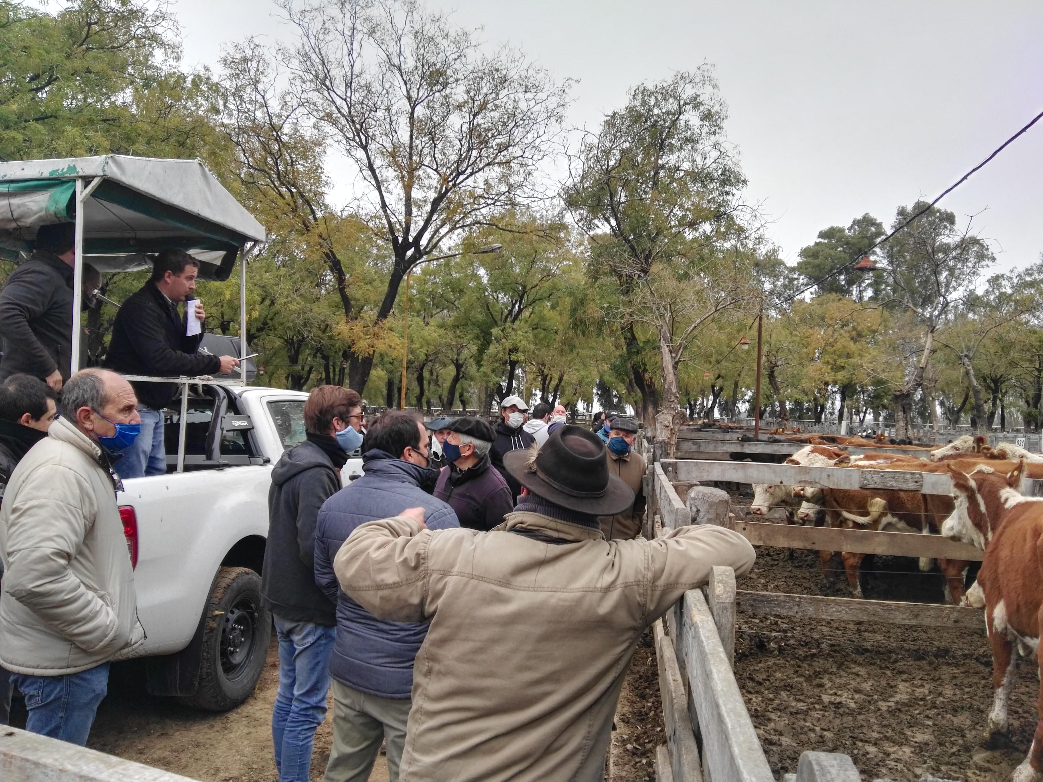Remate Néstor I. Goenaga y Cía S.A  2.700 vacunos vendieron en Azul