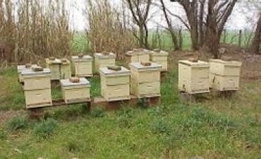Convocan a apicultores a encuentros con funcionarios del ministerio