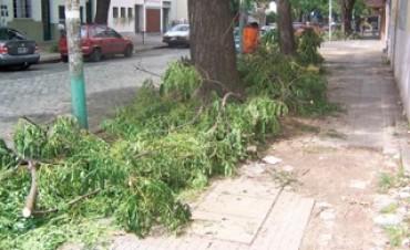 Hasta el 30 de septiembre se recolectan los residuos de poda