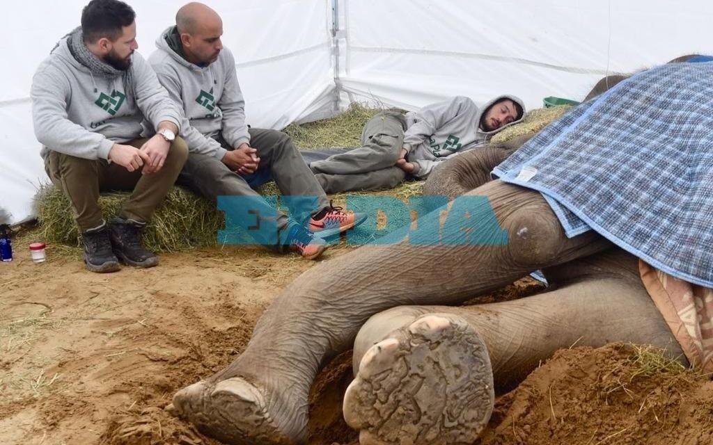 Se fue la elefanta Pelusa