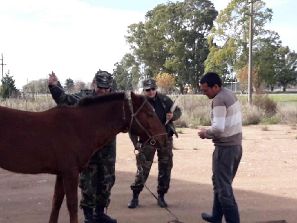 Labran infracción por animal suelto en la vía pública