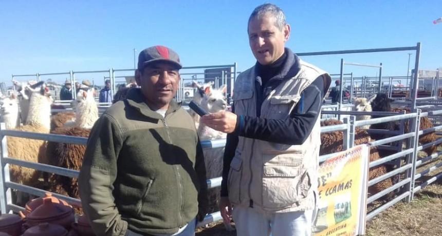 Agroactiva: Jujuy presente con la carne de llama