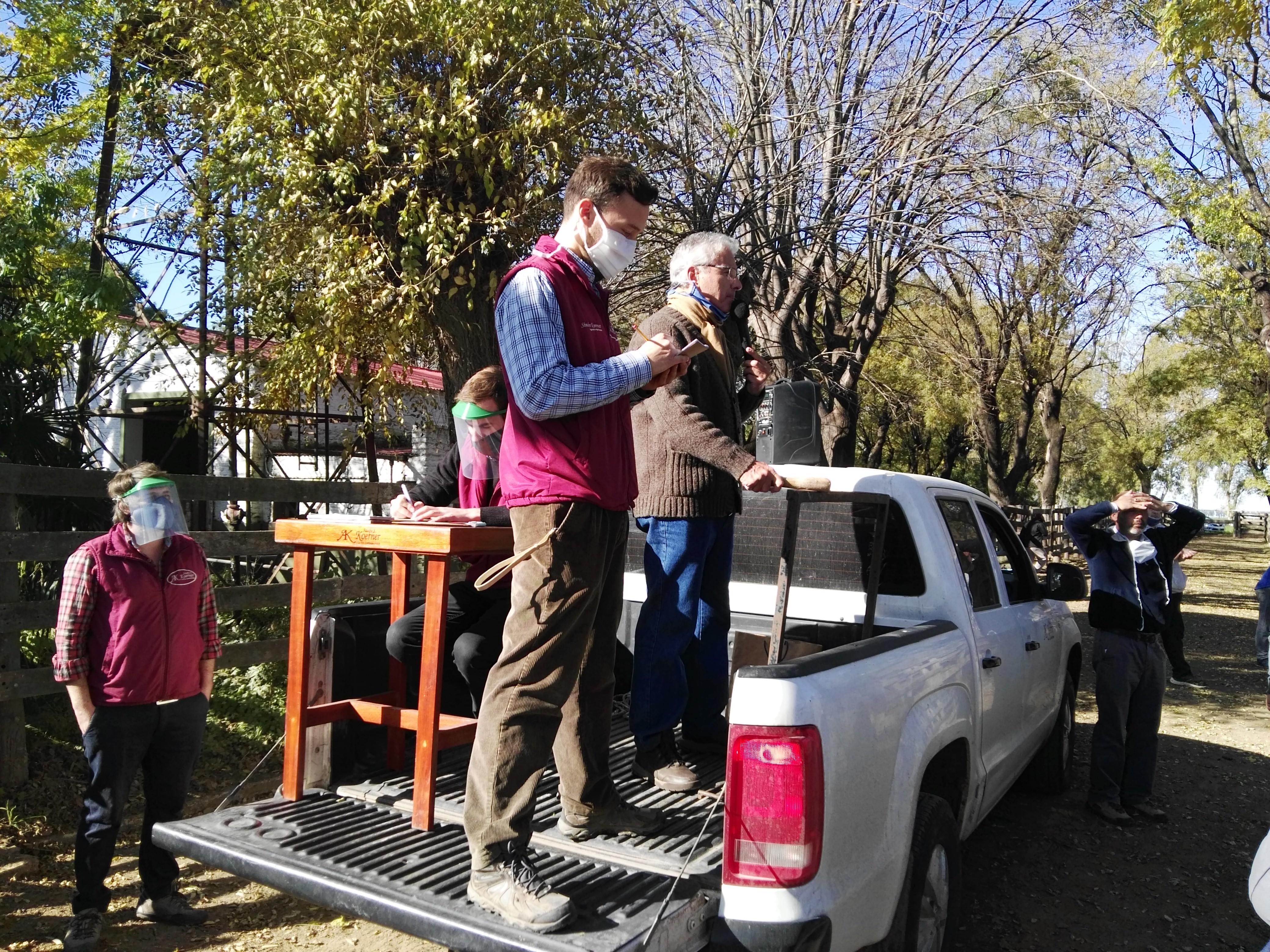 Remate Adolfo S.Koerner y Cía S.A en Sociedad Rural de Azul