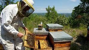 'La miel argentina es reconocida en el mundo como una de las mejores'