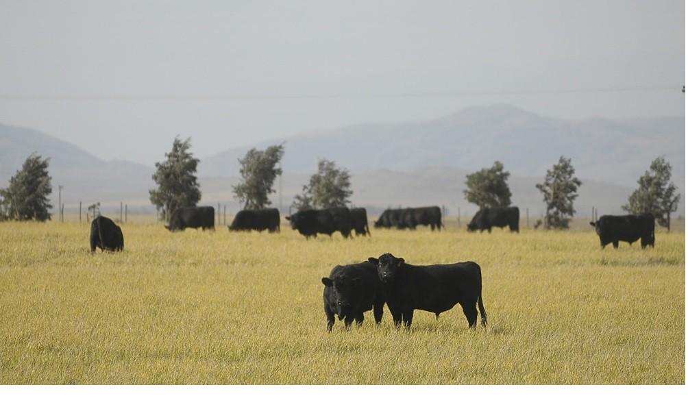 Reabren de manera parcial las exportaciones de carne y amplían la oferta de cortes a precios accesibles