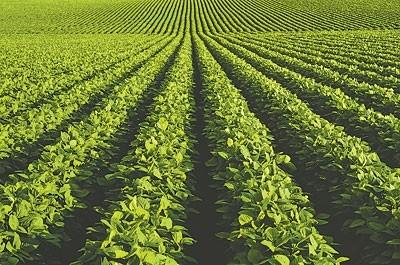 Cosecha: rendimientos aceptables en soja y maíz