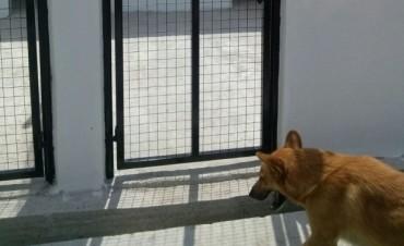 Instan a la tenencia responsable y a la adopción de mascotas