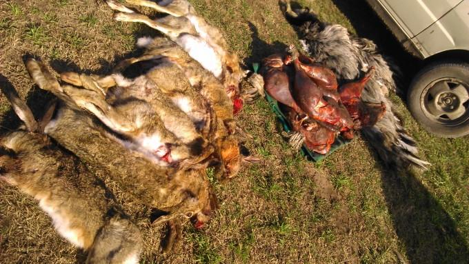 Continúan los operativos contra la caza furtiva