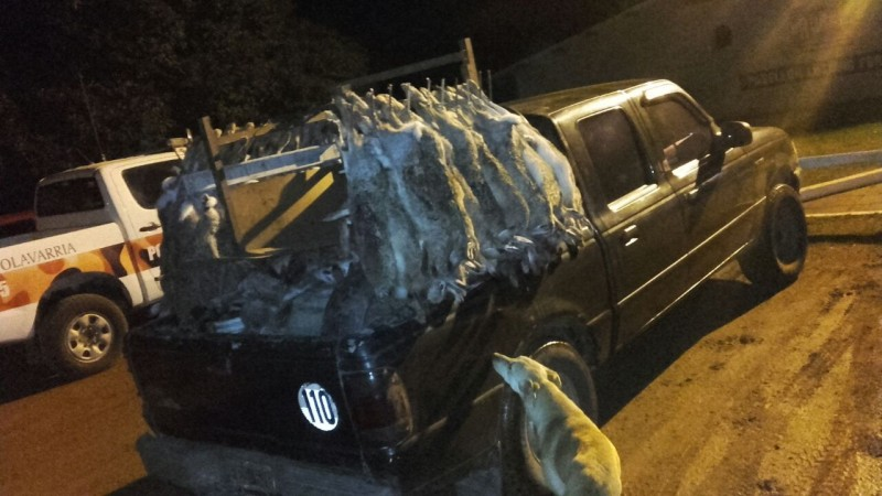 Retuvieron una camioneta que transportaba ilegalmente liebre