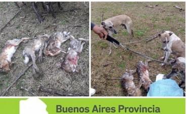 Procedimientos contra cazadores en campos de la región
