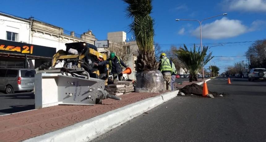 El Municipio realiza plantaciones de nuevas palmeras