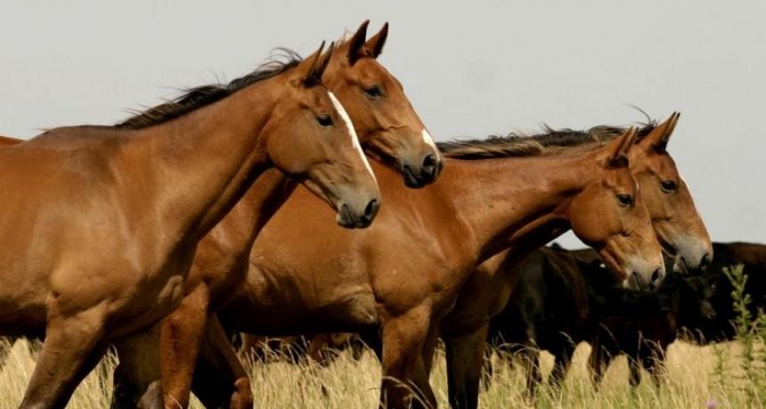 Nuevo taller sobre cuidados básicos de caballos