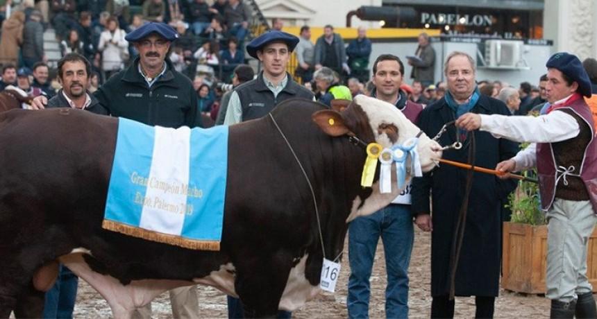 Exposición Rural: los campeones macho y hembra son de cabañas entrerrianas