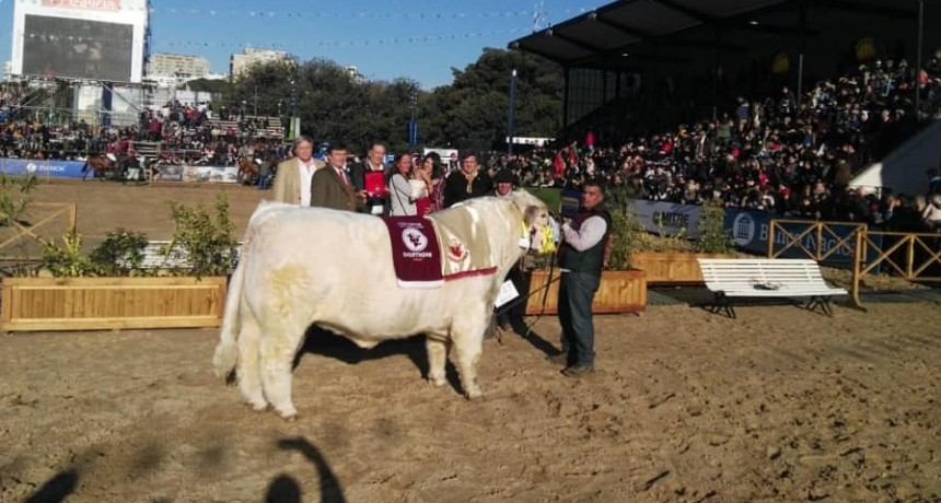 Palermo: se realizó la coronación de la raza Shorthorn