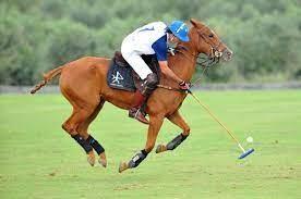 Siempre me gustaron los caballos; aprendí y empecé a trabajar con Carlos 'Polito' Ulloa