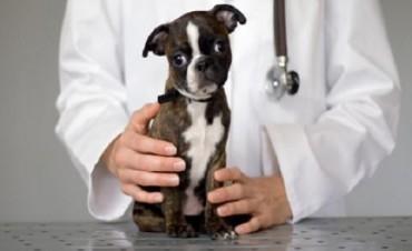 Mascotas: continúan las castraciones gratuitas
