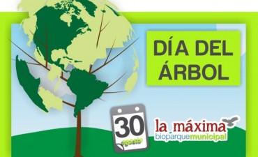 El 30 de agosto se festeja el Día del Arbol