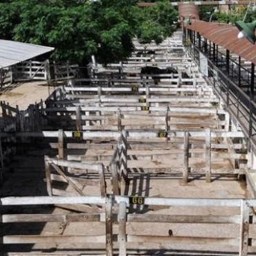 Cese de comercialización agropecuario