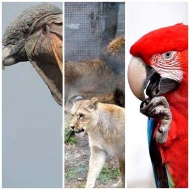Se conocieron más datos de los animales fallecidos en La Máxima