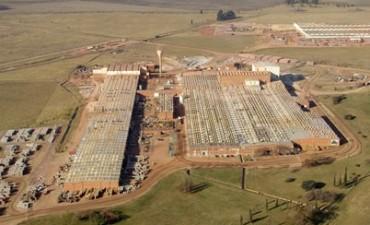 Descartan despidos encubiertos en LOSA y Cerro Negro