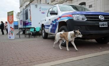 El quirófano veterinario móvil continúa itinerando