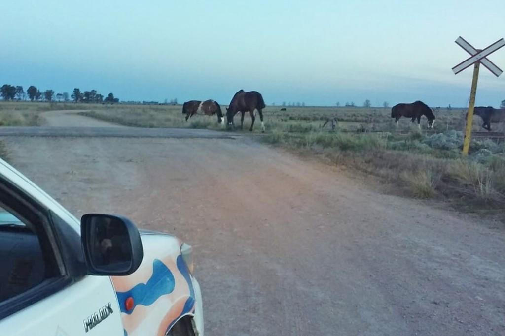 Animales sueltos en la zona de Muñoz