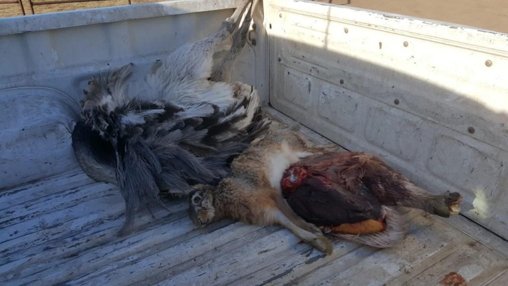 Labraron infracción a cazadores