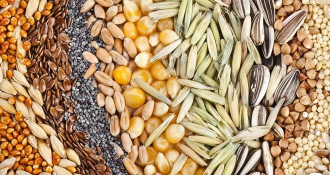 Charla abierta sobre banco comunitario de semillas
