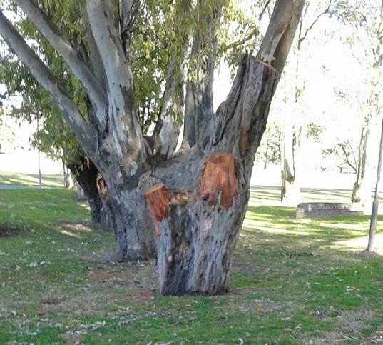 Parque Eseverri: un nuevo árbol cortado