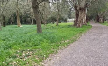 """Se celebrará el Día del Árbol en el Bioparque """"La Máxima"""""""