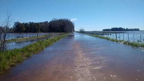 Inundaciones: habrá merma en la producción agrícola ganadera en el partido