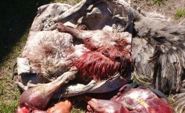 Detenidos por caza furtiva