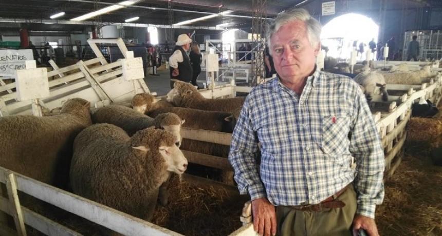 Producción ovina: 'nuestra raza es doble propósito,carne y lana'