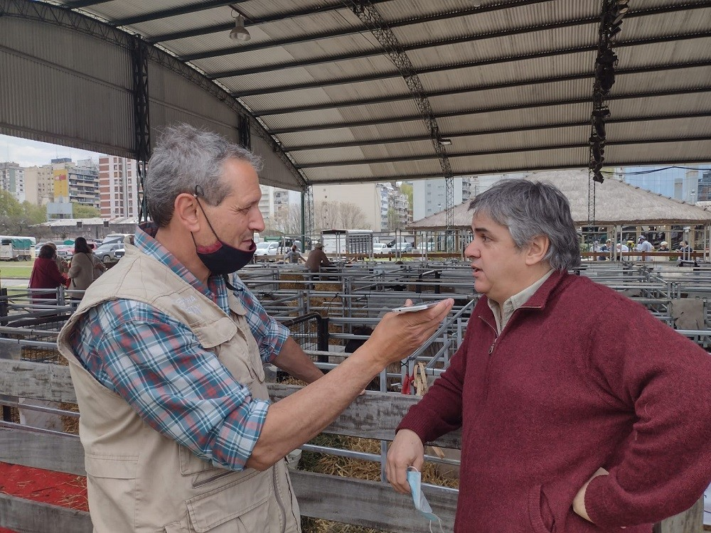 Expectativa por la exposición de raza ovina en Palermo