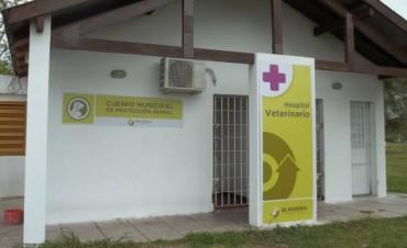 Se pondrá en funcionamiento el Hospital Veterinario Municipal