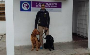 Solicitan declarar de Interés Legislativo la escuela Canina Seguridad, Búsqueda y Rescate