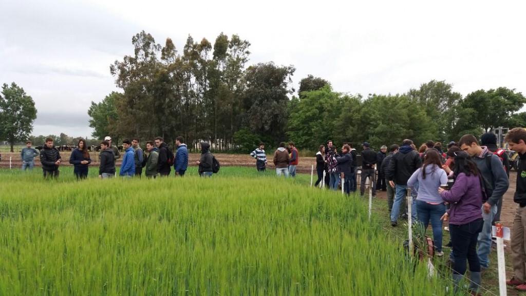Azul: la Facultad de Agronomía realiza la VII Jornada de campo 2018