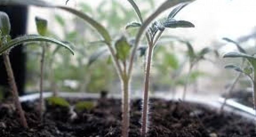 Taller de elaboración de plantines
