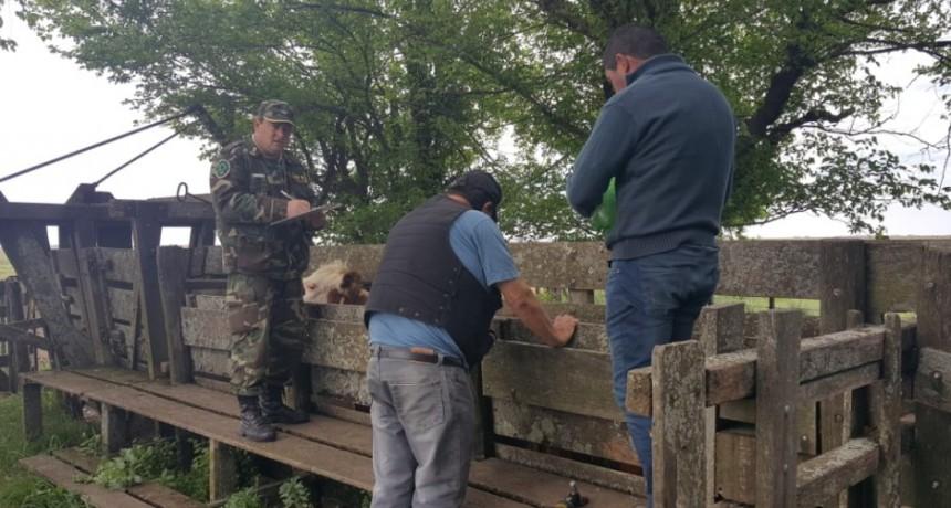Procedimientos por animales invasores en establecimientos rurales