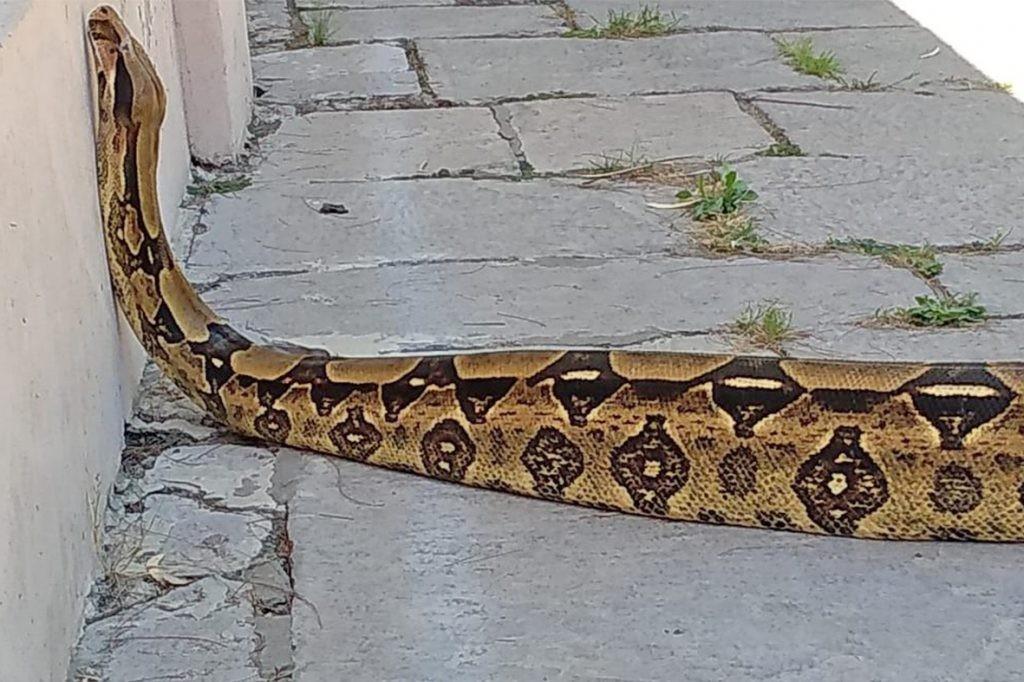 """El Bioparque """"La Máxima"""" trabaja en un Programa de Conservación de Reptiles"""