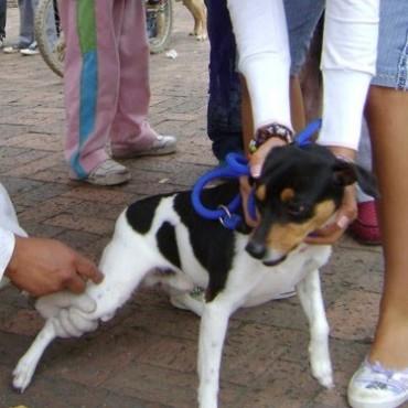 Continúa la Vacunación Antirrábica Canina y Felina 2013